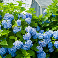 Spring in Nantucket. Professional cleaning service. clean your house for spring